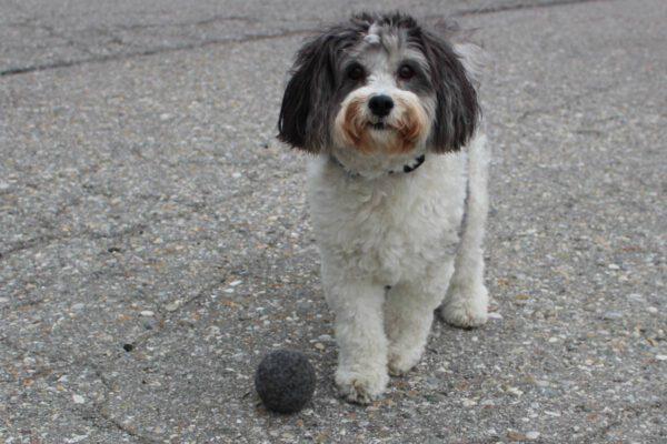 Hundespielzeug WOLLBOLLER