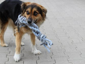 Hundespielzeug FANGMICHZIEHMICH